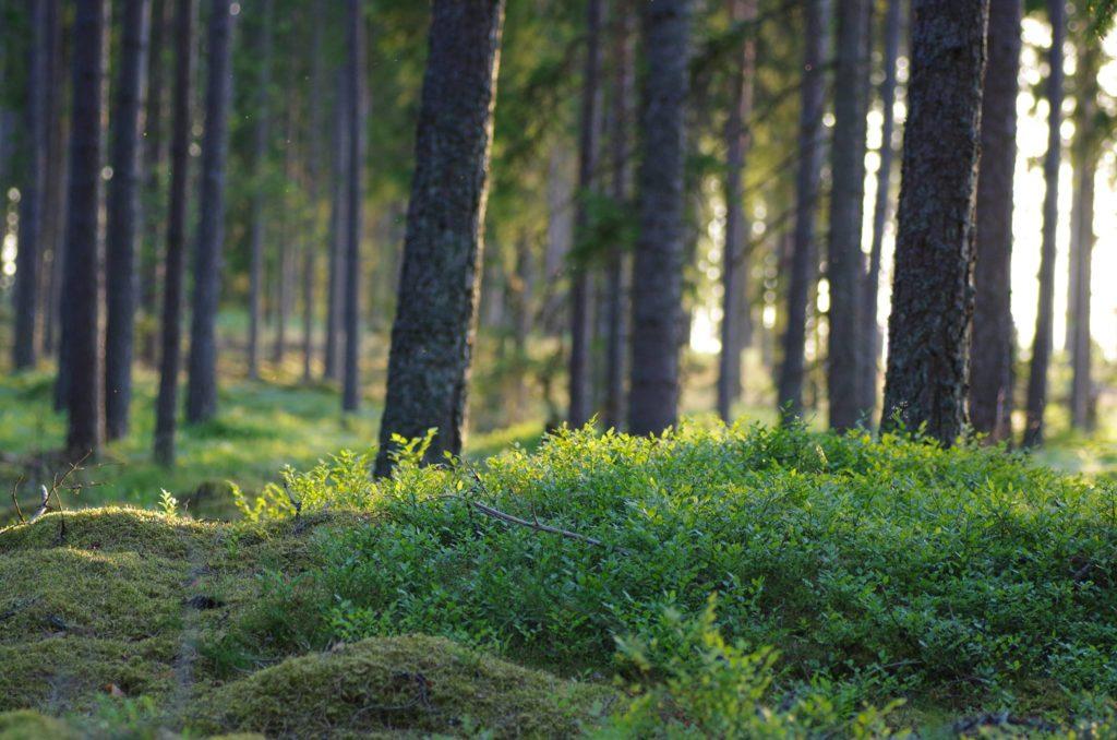 Bo på hotell i Småland