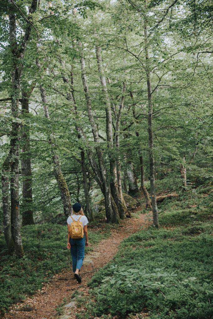 Boka ett vandringspaket åk besök Åsnen nationalpark
