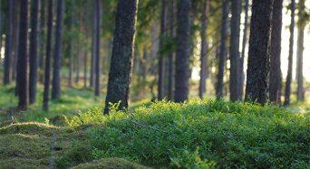 Upptäck den svenska skogorna och ta en weekend på Asa Herrgård